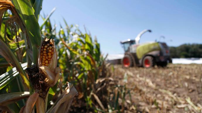 monsanto-patents-sue-farmers.si